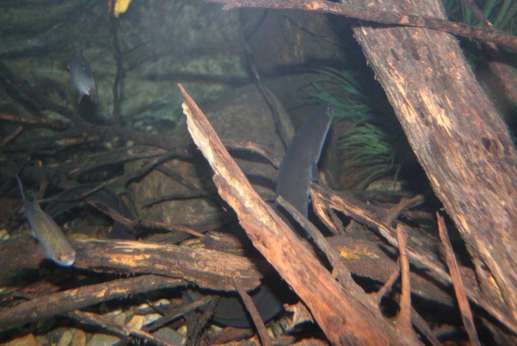 Aal in Versteck