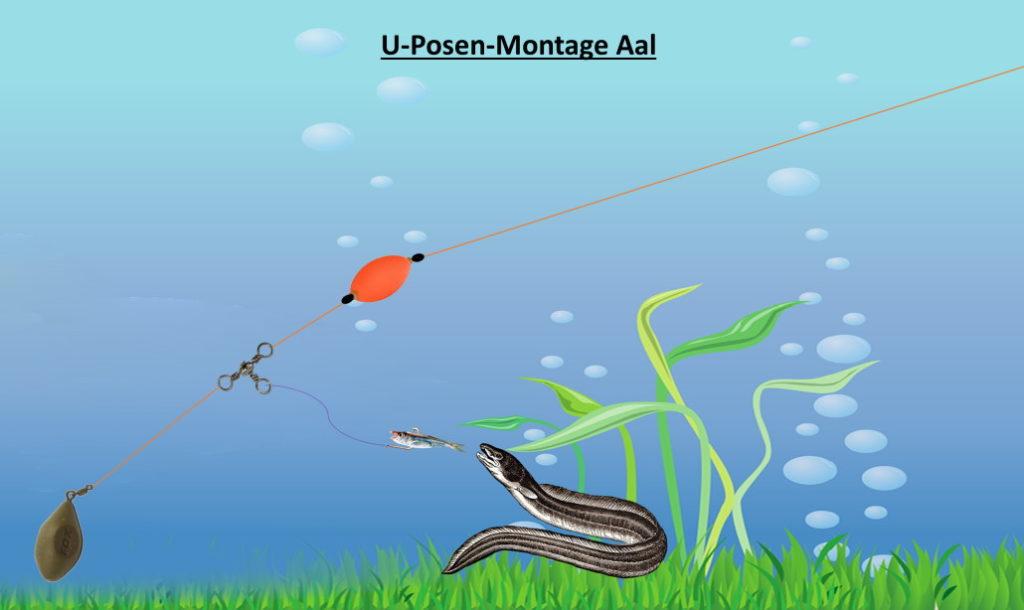 u-posenmontage_aal